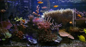 tropical saltwater aquarium