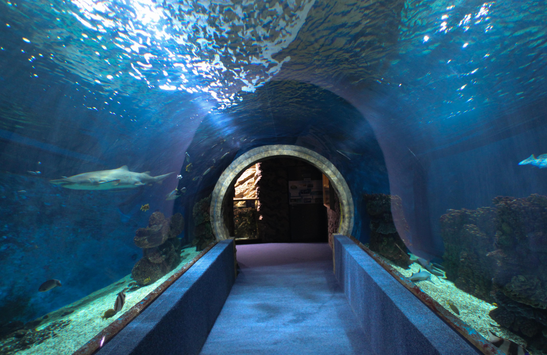 Dr Sid Solomon Office Hallway Aquarium